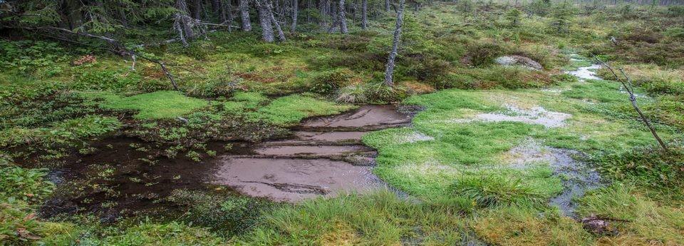 Årets källa 2014 - Näråkällan, nordvästra Dalarna